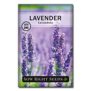 Lavender Seed Packet Front