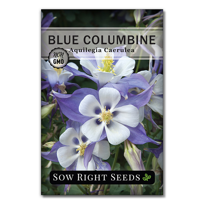 Blue Columbine seed packet front