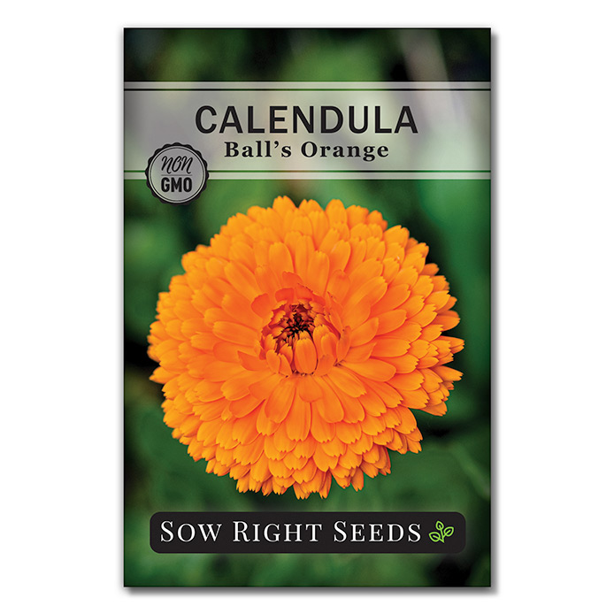 Calendula seed packet front