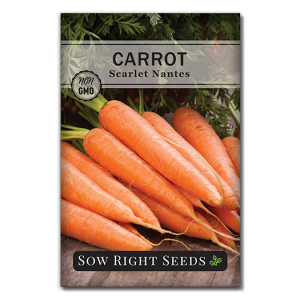 Scarlet Carrot Front