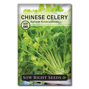 Celery Front