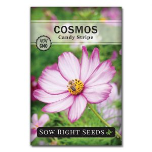 Cosmos Candy Stripe seed packet front