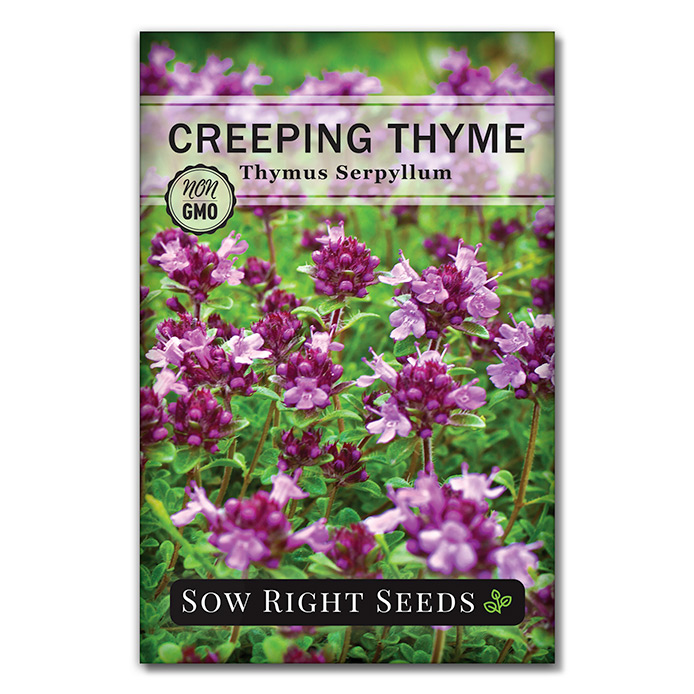 Creeping Thyme seed packet front