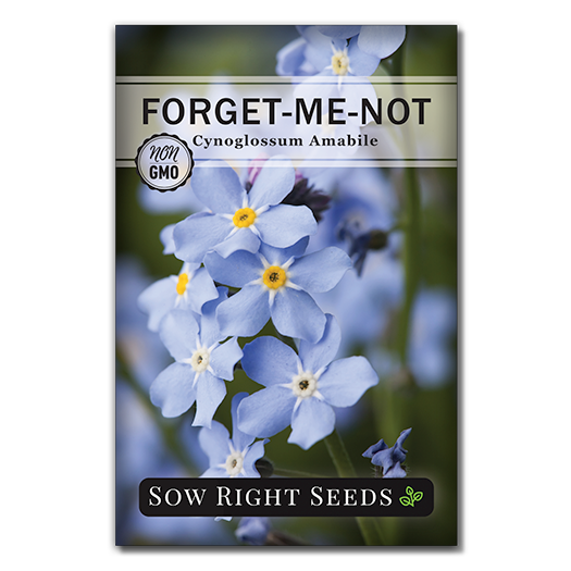 Forget-Me-Not seed packet front
