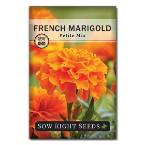 French Marigold Petite seed packet front