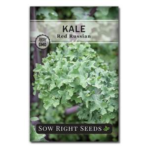 Kale Red Russian Front