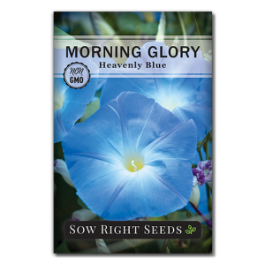 Morning Glory Heavenly Blue Front (1)