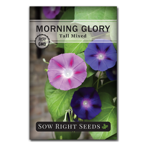 Tall Mixed Morning Glory seed packet front