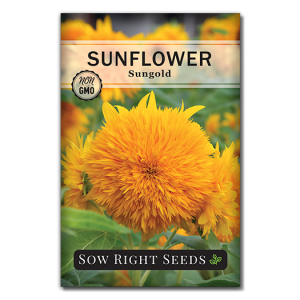 Sunflower Sungold Front