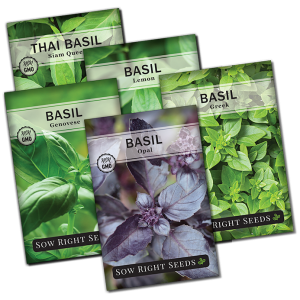 basil seed collection