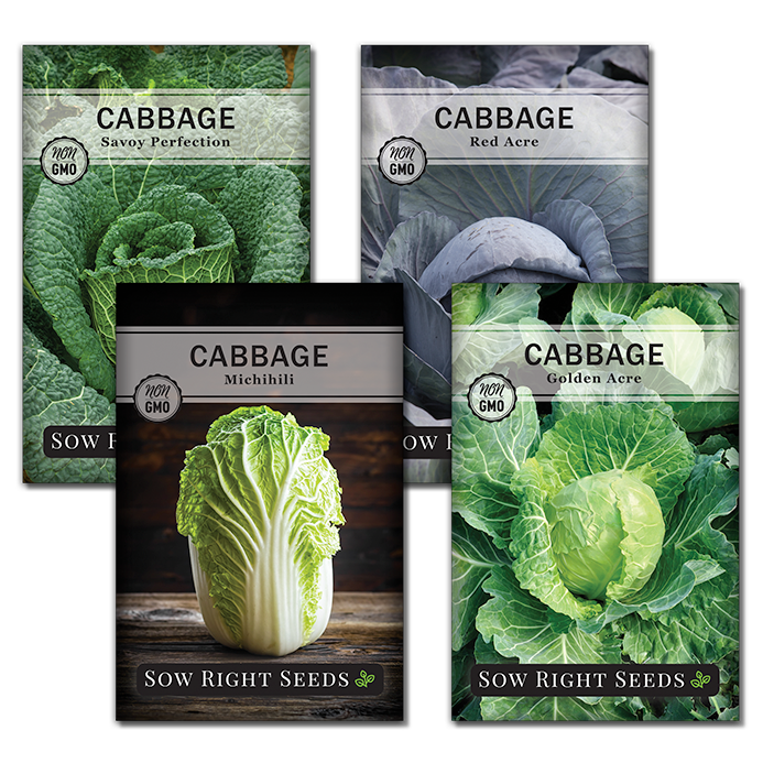cabbage seed collection