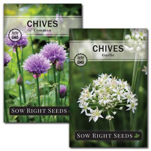 chive seed collection