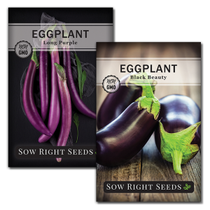 eggplant seed collection