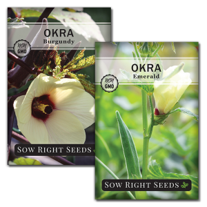 okra seed collection