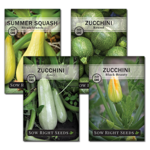 zucchini seed collection