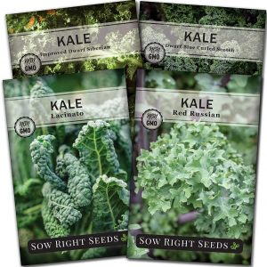 kale seed collection