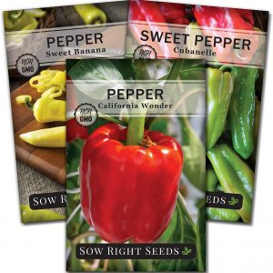 sweet pepper seed collection
