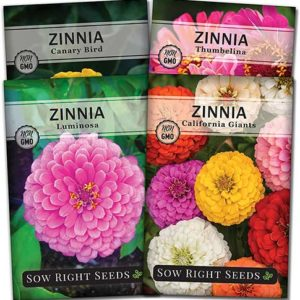Zinnia flower seed collection
