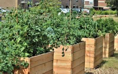 Soil for Containers or Raised Beds