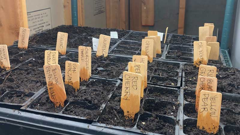 planting seeds indoors with grow lights