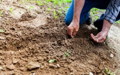 Soil: the foundation of your garden