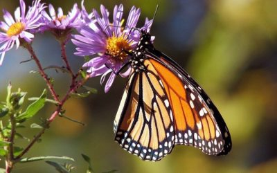 Creating a Pollinator Friendly Garden: Top reasons why & how to do it