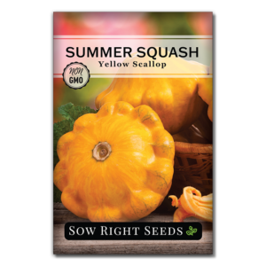 yellow scallop summer squash seeds