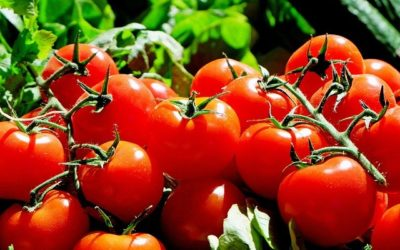 Why start tomatoes from seed? Six good reasons