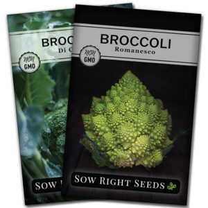 broccoli seed packets