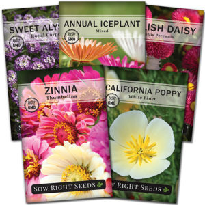 Dwarf Flower Seed Collection
