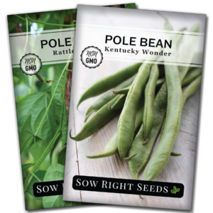 pole bean seed collection