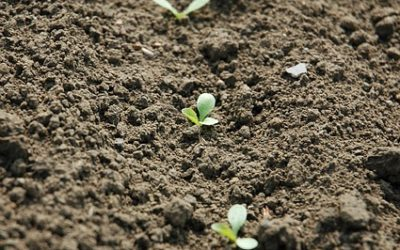 What is Direct Sowing?