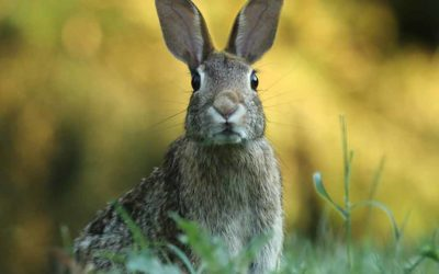 Keeping Rabbits Out of Your Garden