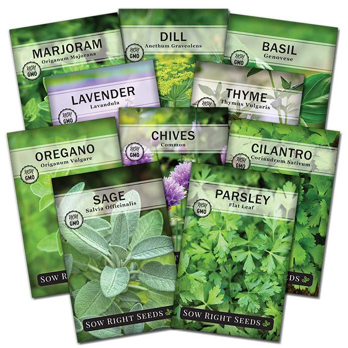 10 herb heirloom garden seed collection