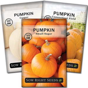 pumpkin seed collection